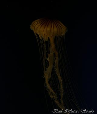 DC2010.GAAquarium.78bis