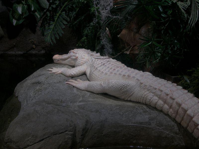 DragonCon 2011, GA Aquarium 28