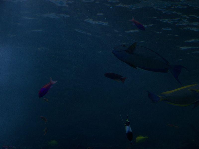 DragonCon 2011, GA Aquarium 2