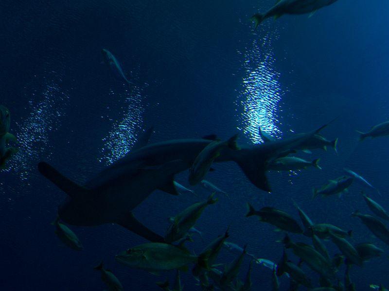 DragonCon 2011, GA Aquarium 23