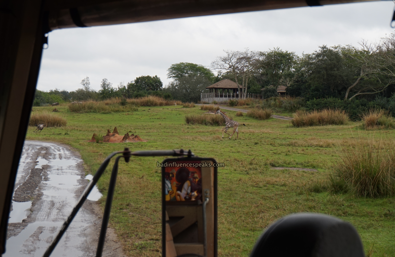 Ak giraffe chasing wildebeast