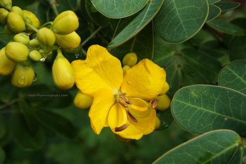 Ak yellow flowers bis