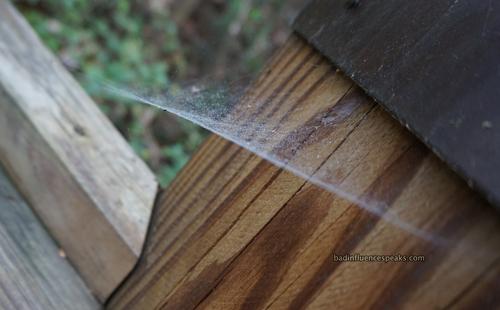 Cw misty spiderweb bis