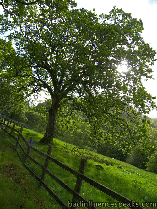 Fairy Glen path 3 bis