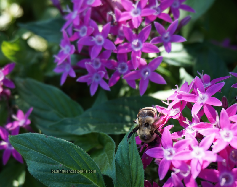 Bee on flower at epcot bis