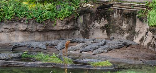 Ak crocs