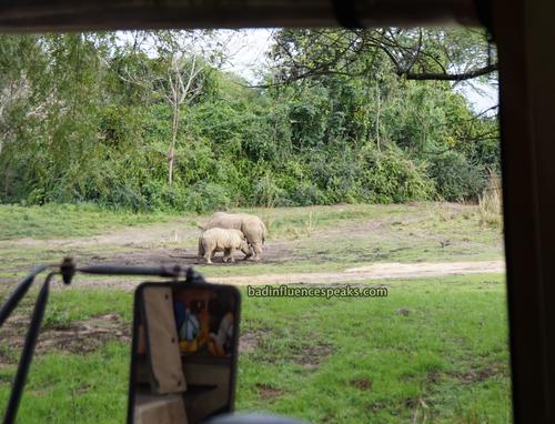 Ak mama and baby rhino bis